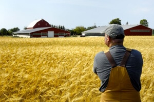 Хочу стать фермером: с чего начать