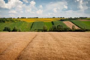 Как оформить земельный пай в собственность
