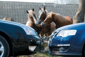 какой транспортный налог на 249 лошадей