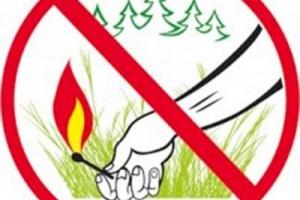 Запрещающие знаки в лесу