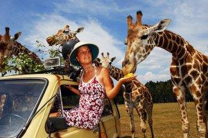 Туристка и жираф