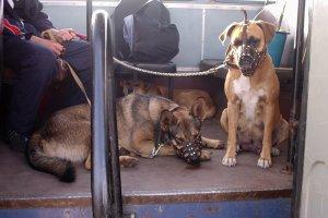 Перевозка собак в общественном транспорте