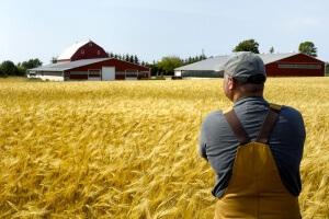 Как стать фермером с чего начать