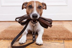 Правила выгула собак в городе: перевозка в транспорте и утилизация отходов