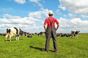 Направления фермерских хозяйств