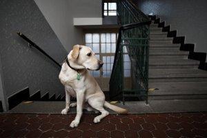 Правила содержания собак в многоквартирном доме в РФ
